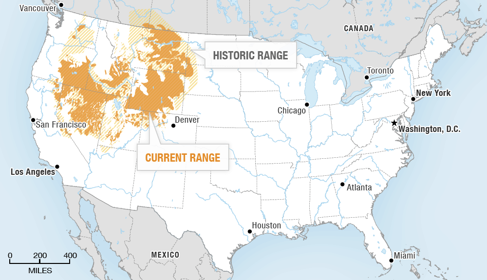 Map showing the current and historic range of the sage grouse
